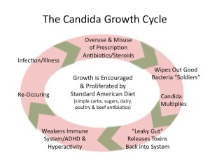 CandidaGrowthCycle