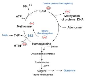 autism-B12-methionine