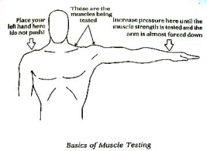 Muscletesting
