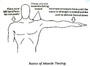 Muscletesting